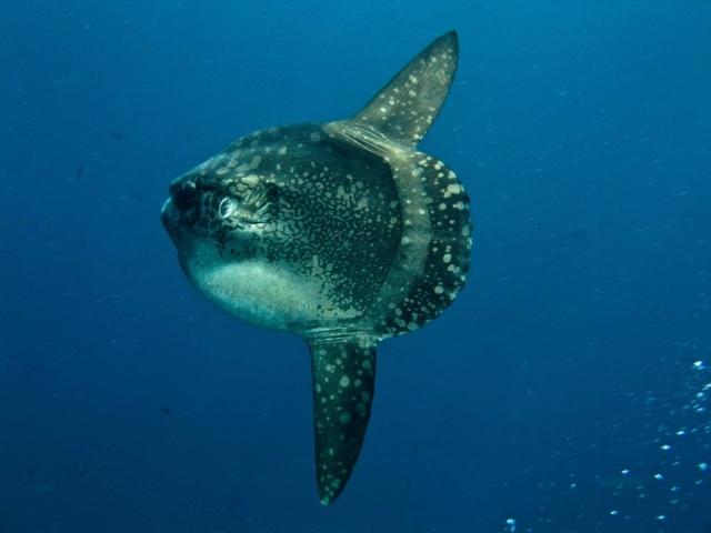 Indonesia Scuba Dive Reviews