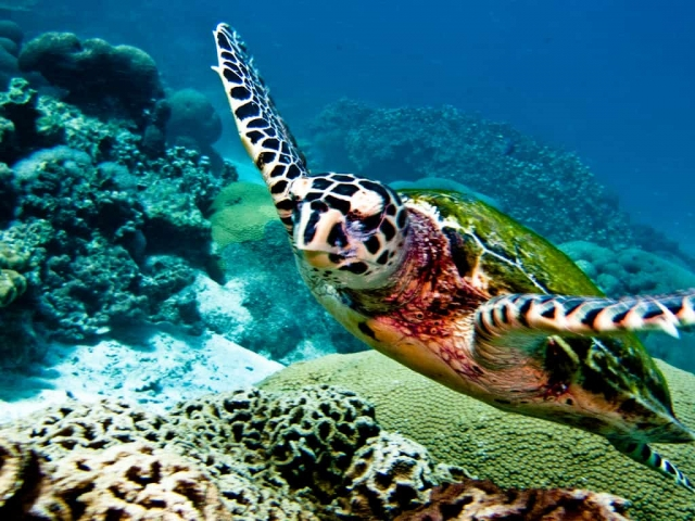 Best diving sites in koh lanta thailand scuba dive reviews by divezone - Where to dive in thailand ...