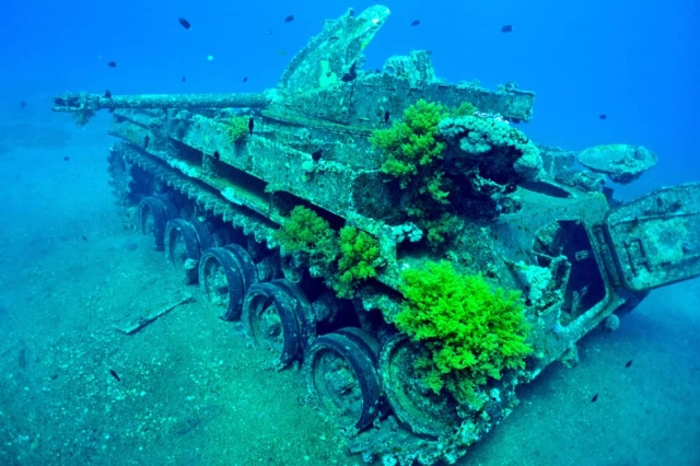 best diving sites in aqaba red sea scuba dive reviews by