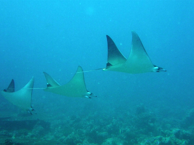 Mobula Diving Maldives Travel Review