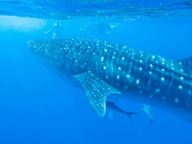 Best diving sites in ningaloo reef australia scuba dive reviews by divezone - Ningaloo reef dive ...