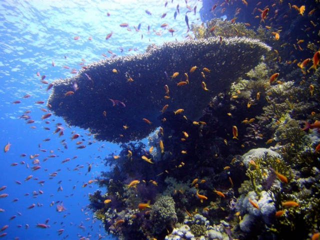 Best Diving sites in Red Sea – Scuba dive reviews by Divezone