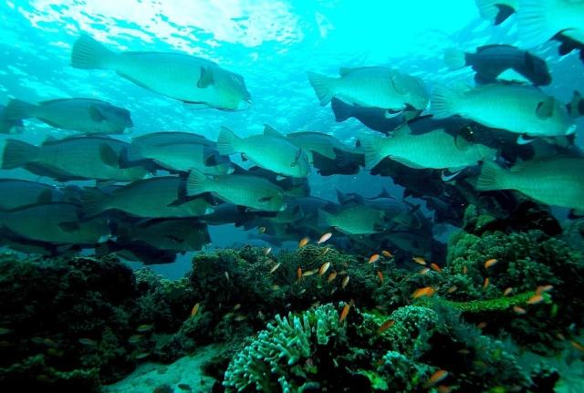 Best diving sites in sipadan malaysia scuba dive reviews - Sipadan dive sites ...