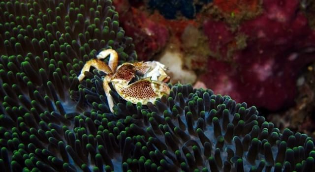 Crab On Coral Reef