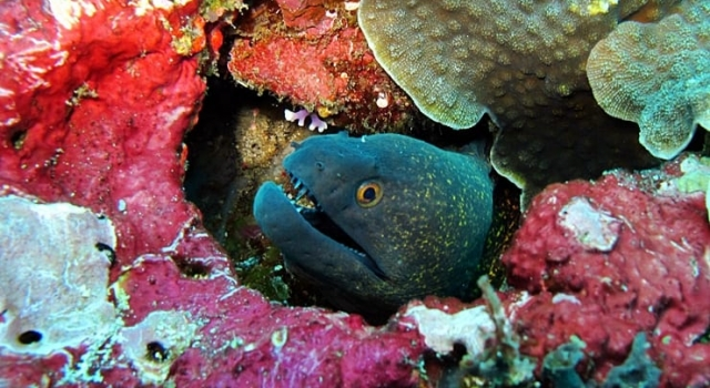 Moray Eel, Ray