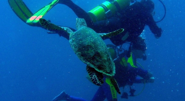 Turtle Playing With Divers