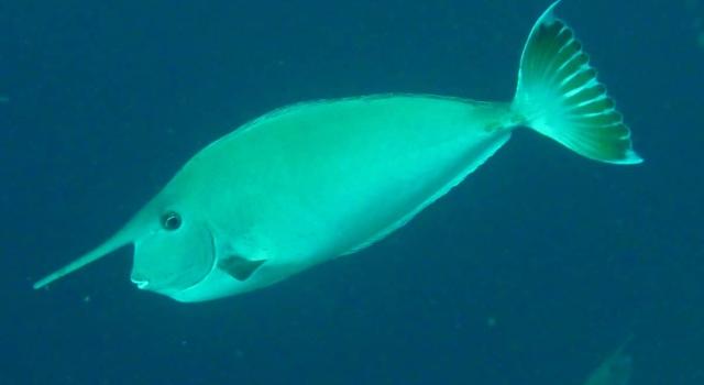 Best Diving Sites In Thailand Scuba Dive Reviews By Divezone