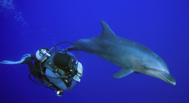 Dolphin and scuba diver side by side...