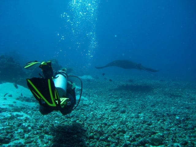 scuba diving pictures