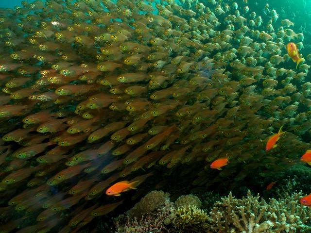 resolution-underwater-desktop-background