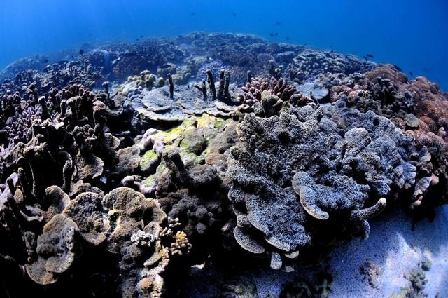 scuba-diving-wallpaper-high-resolution-free