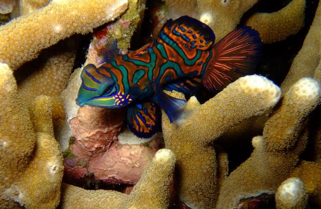 underwater-wallpapers-free
