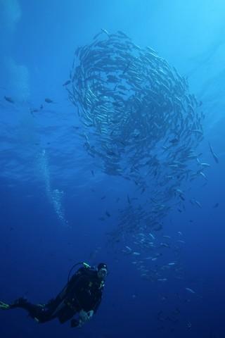 scuba diving in tiputa pass