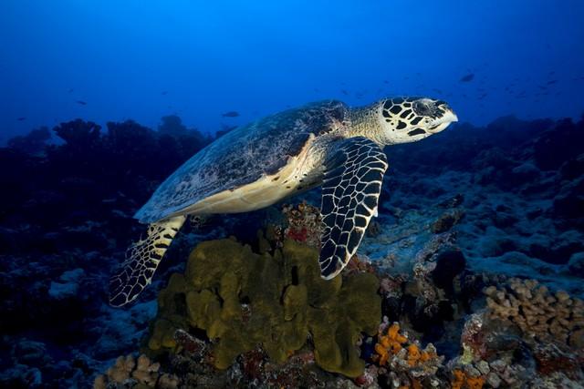 scuba diving rangiroa atoll