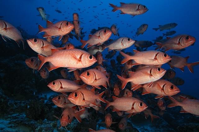 underwater photo diving rangiroa