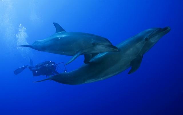 scuba diving tiputa pass