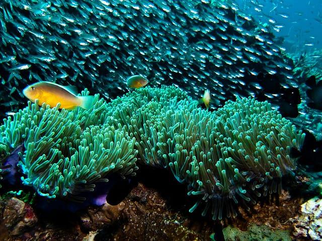 Best Diving sites in Koh Phi Phi – Thailand Scuba dive ...