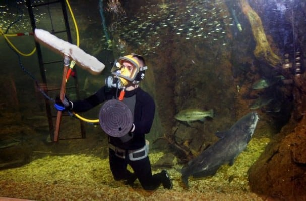 Divemaster and diving instructor job description for Fish for jobs