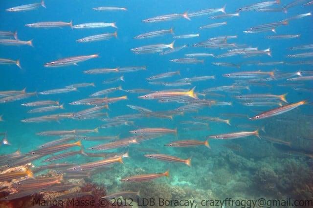 diving-boracay-laguna-marion-masse