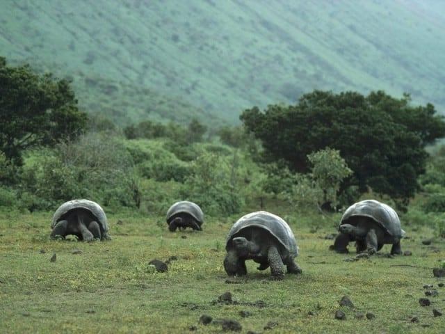 best galapagos liveaboard land tortoise