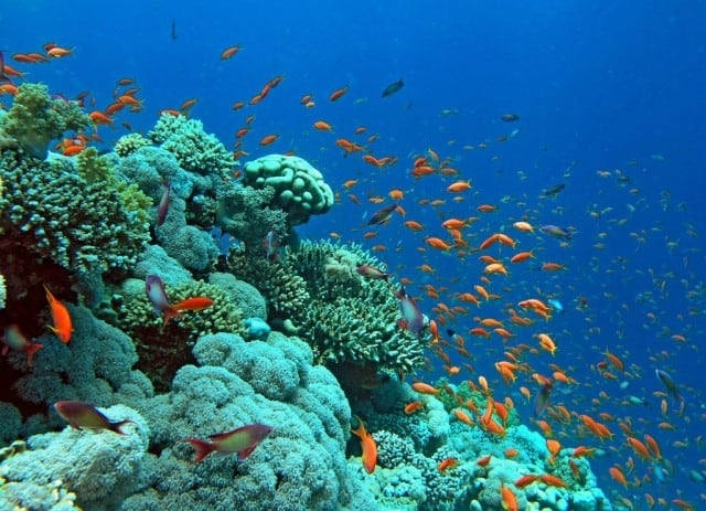 The striking array of marine creatures and corals found in the Red Sea is such a feast of beauty!