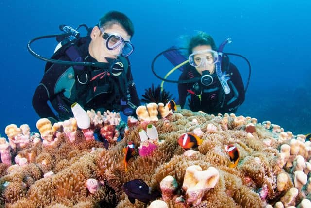 Diving in the Great Barrier Reef is definitely possible any time of the year!