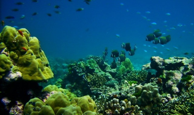 Healthy coral reef, abundant fish and clear waters. Can a diver ask for more while diving in Similan islands?