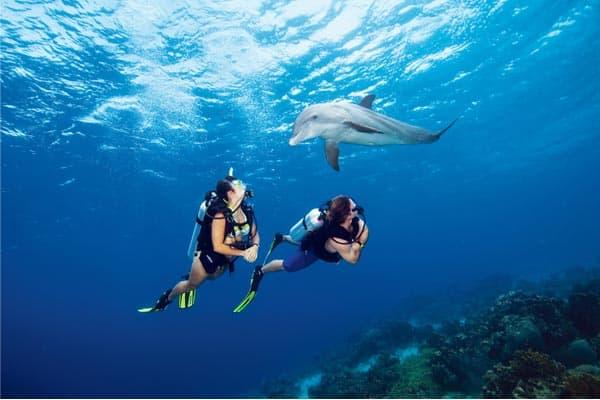 scuba-diving-dolphin