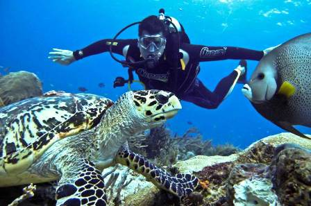 A dive holiday is a great way to spend time and be connected with the astounding marine life underwater!