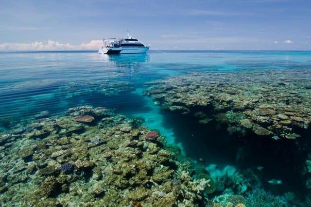 Budget liveaboard great barrier reef divezone - Pro dive cairns ...