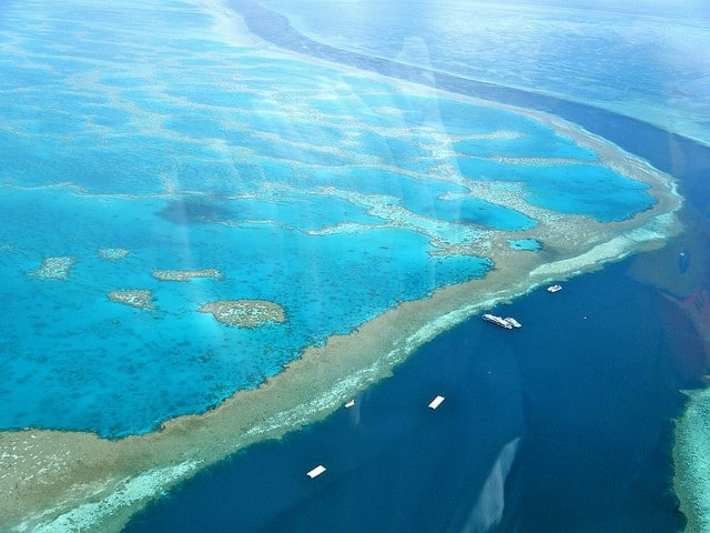 coral-great-barrier-reef