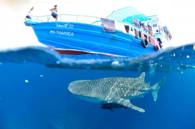 MV Thai Sea budget liveaboard similan islands