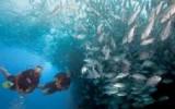 Bali Reef Divers Tulamben