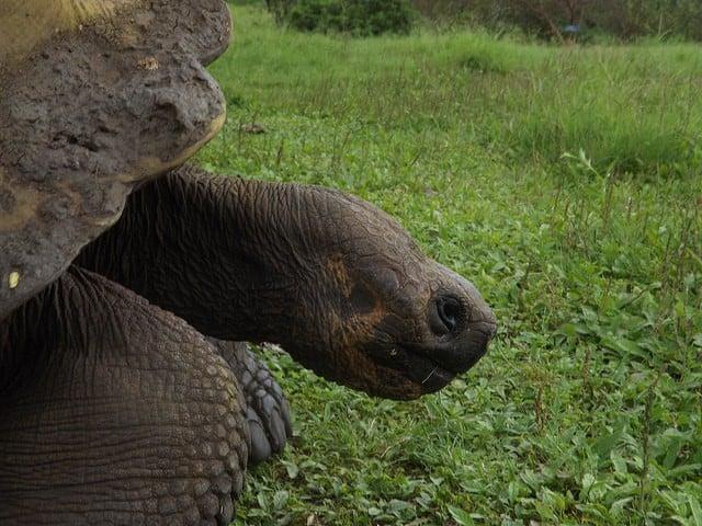 galapagos Land Tortoise by pantxorama