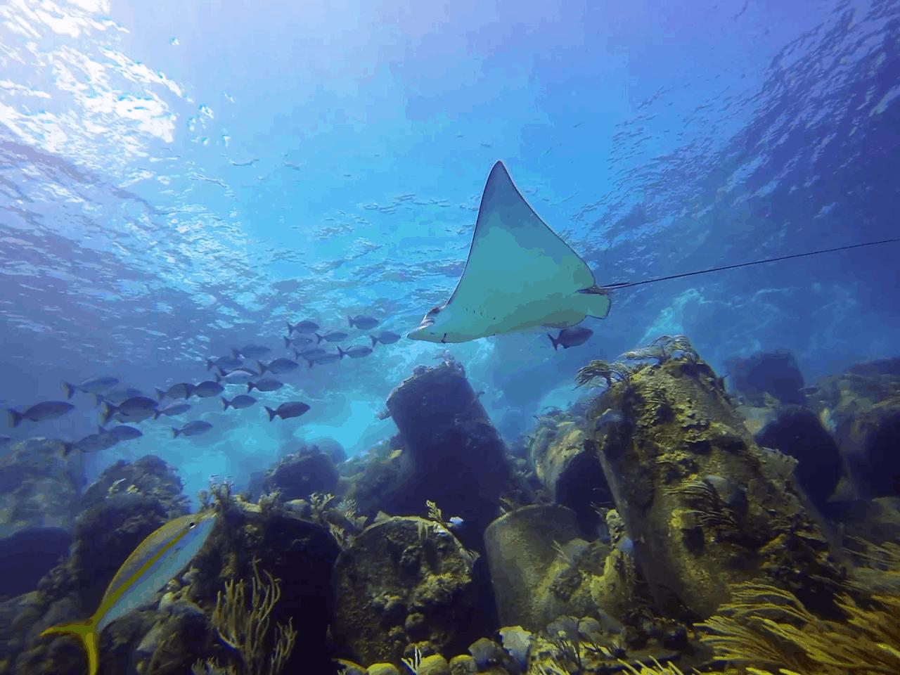 best bahamas liveaboard diving