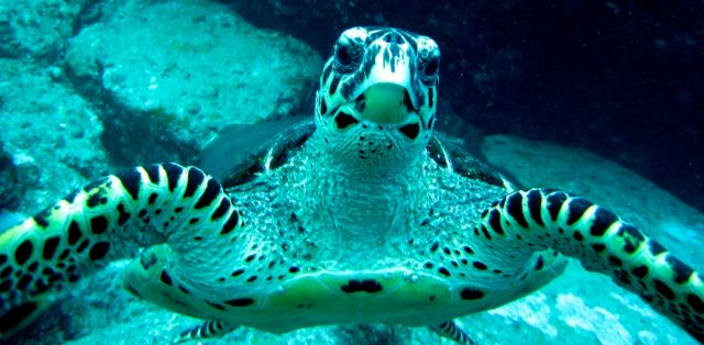 best scuba diving in the seychelles
