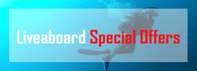 liveaboard special offers deal discount last minute