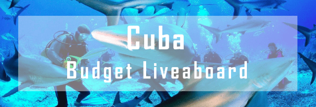 budget liveaboard cuba