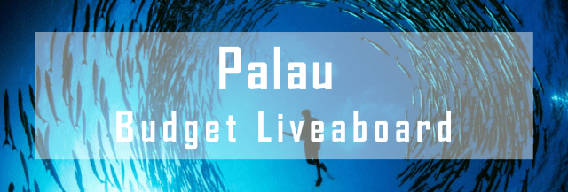 budget liveaboard palau micronesia diving