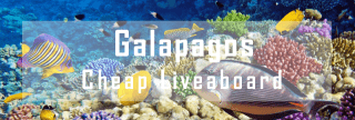 cheap liveaboard diving cruise in the galapagos