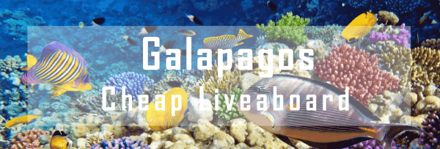 cheap liveaboard galapagos diving cruise