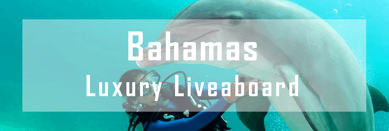 luxury liveaboard bahamas