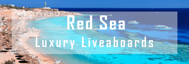 luxury liveaboard red sea diving cruise
