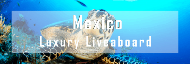 luxury liveaboard mexico diving cruise