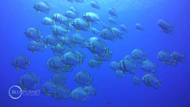 planet divers dahab