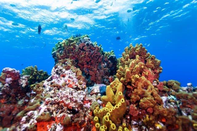 saba diving reefs