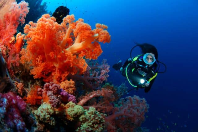 fiji best summer diving destination