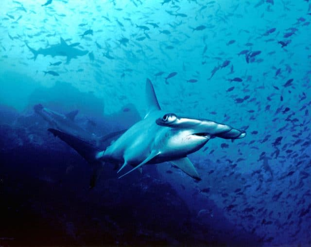 best summer diving destination galapagos