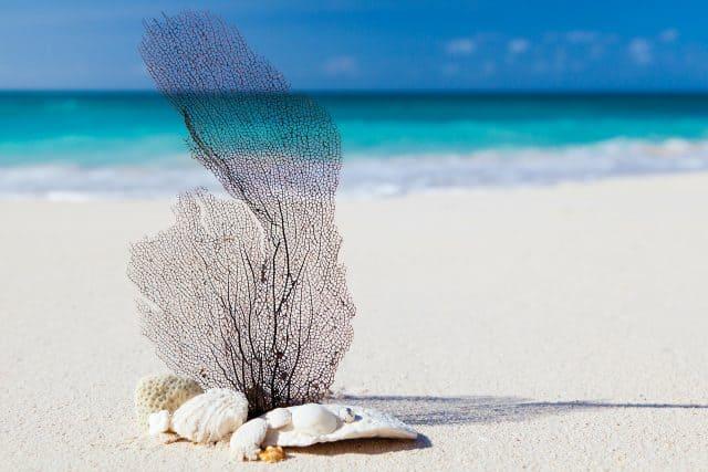 best scuba diving caribbean bonaire bahamas cayman