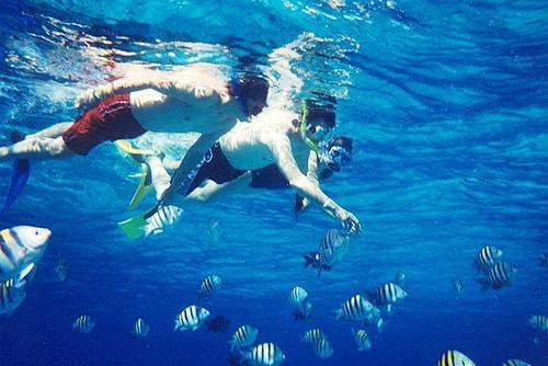 snorkeling scuba diving mayan rivera